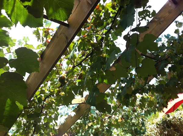 Growing Honest Food better shot of canopy