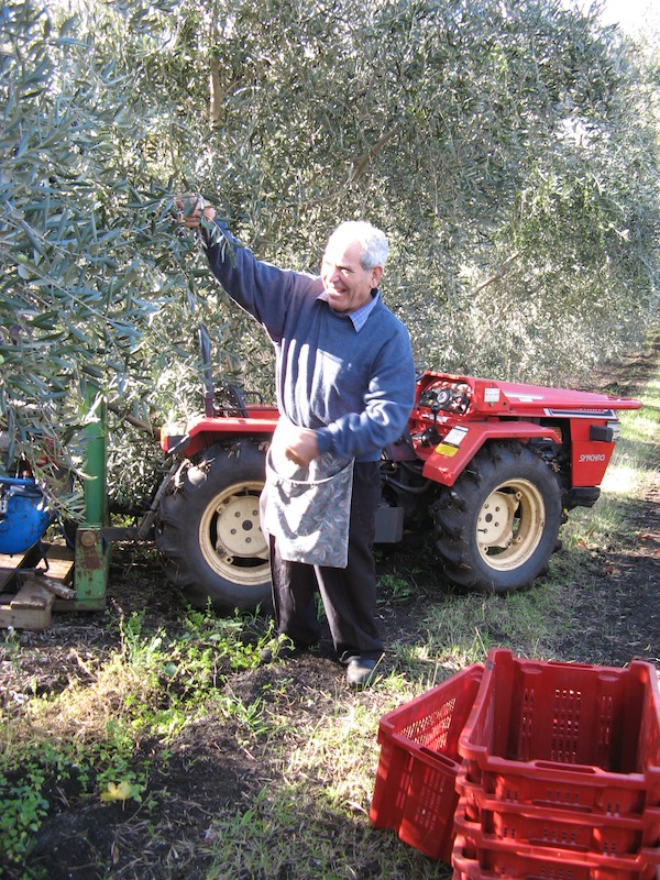 Rose Creek Estate and Growing Honest Food Tony in the Olive Grove