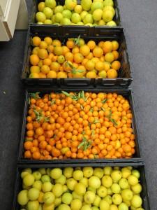 OzHarvest citrus