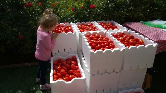 Melbourne Tomato Festival boxes