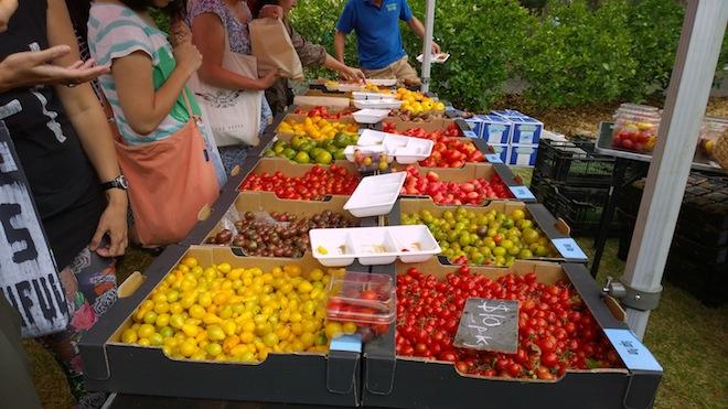 Melbourne Tomato Festival more bounty