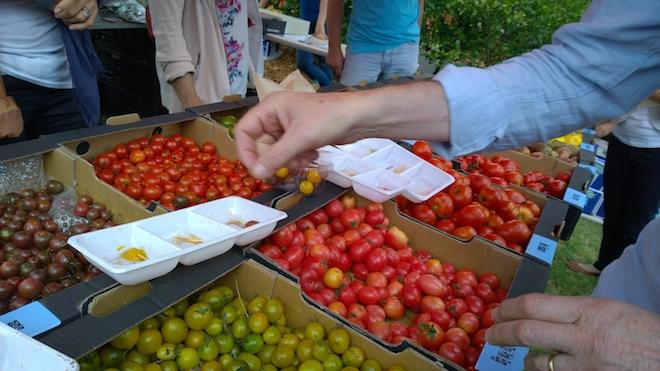 Melbourne Tomato Festival tomatoes handpicked