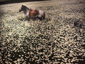 Seoul Food Linda McCartney horse