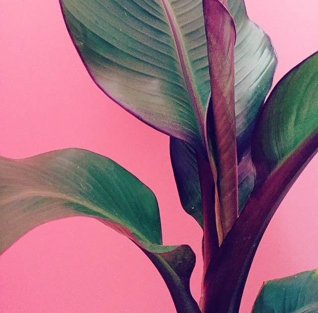 Plants on Pink 1