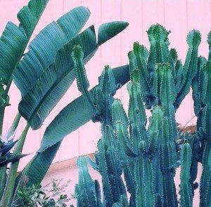 Plants on Pink 3