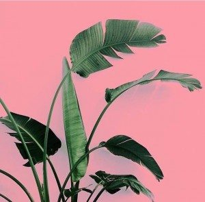 Plants on Pink 4