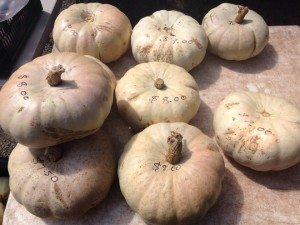 Daylesford & Macedon Ranges Food Mini Guide Kyneton Farmers Market landscape
