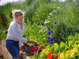 Flowerdale Farm 3