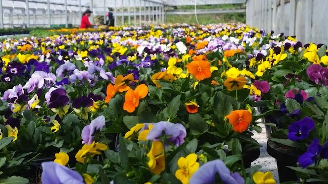 Flowerdale Farm 6