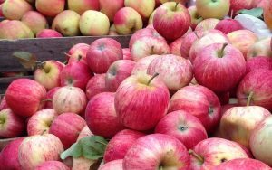 Gasworks Arts Park Farmers Market apples