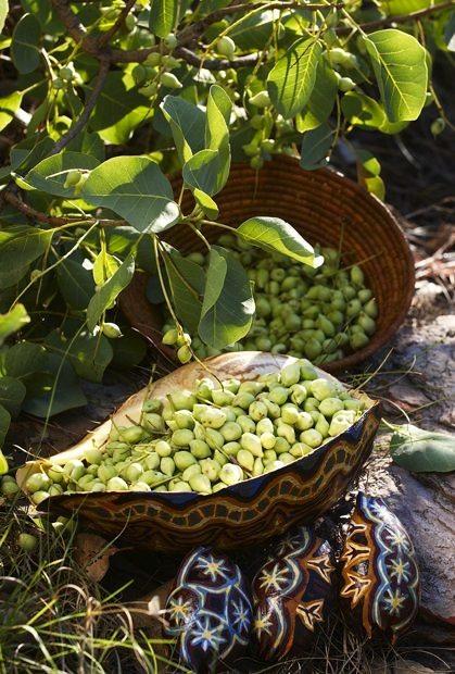Australian Native Bush Food Kakadu Plum AustralianGeographic.com.au_