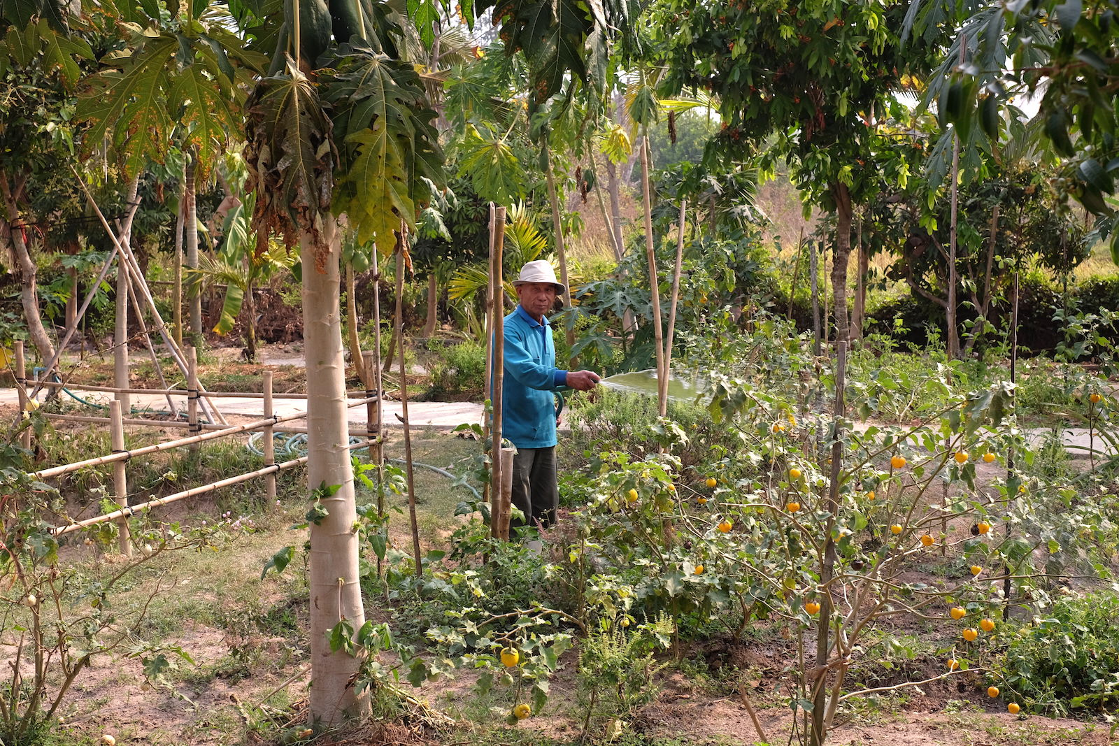 Chiang Mai Thai Farm Cooking School Garden