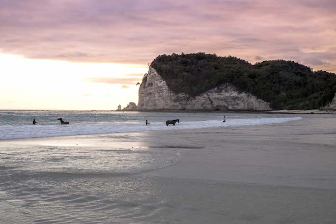 Sumba in Pictures beach landscape with horses