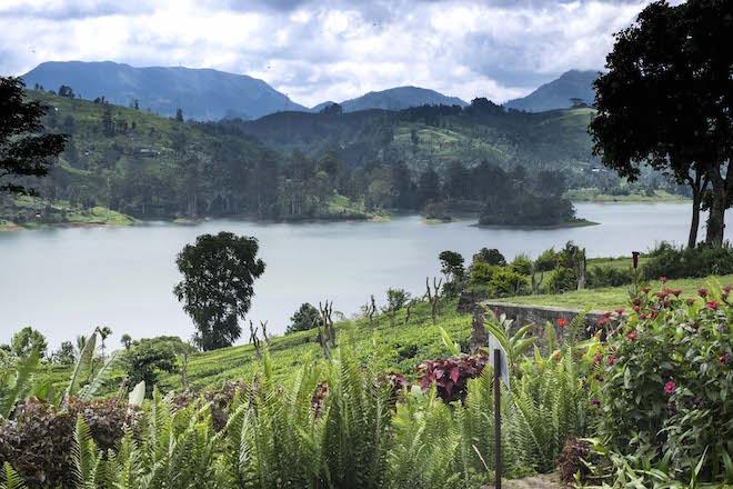 Sri Lanka Ceylon Tea Trails Castlereagh View