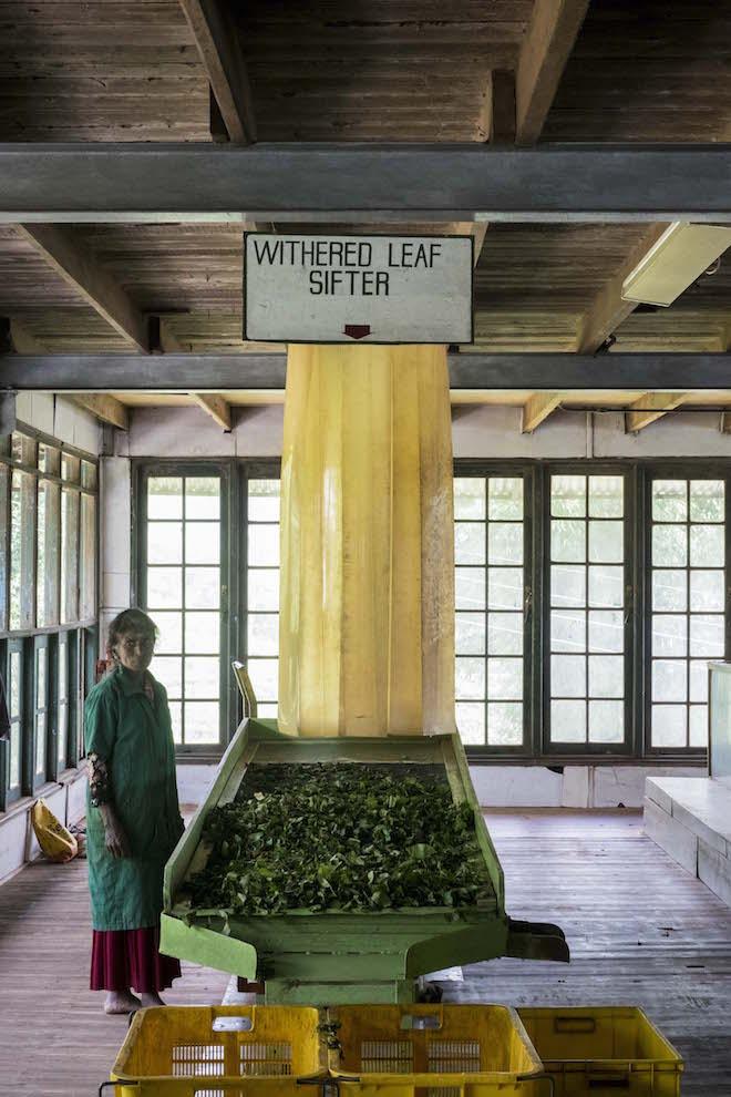 Sri Lanka Ceylon Tea Trails Factory Sifter 2