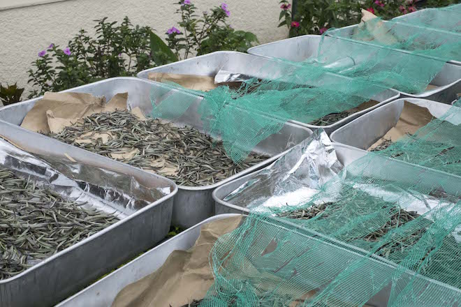 Sri Lanka Ceylon Tea Trails Factory Tea in Boxes 2