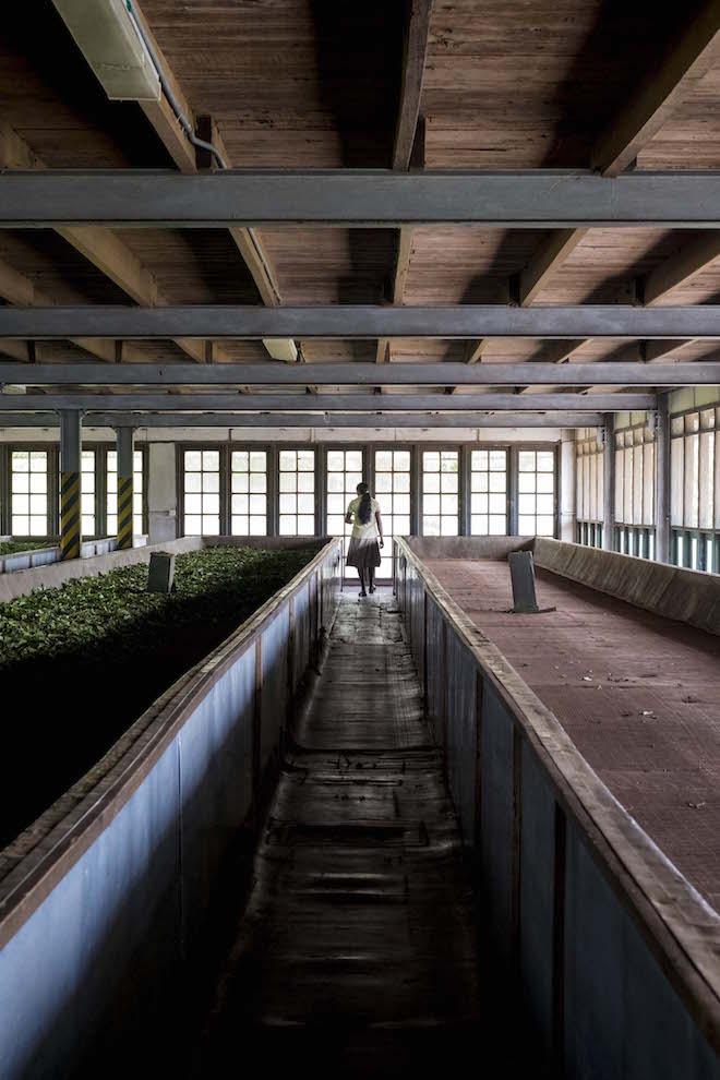 Sri Lanka Ceylon Tea Trails Factory Window girl