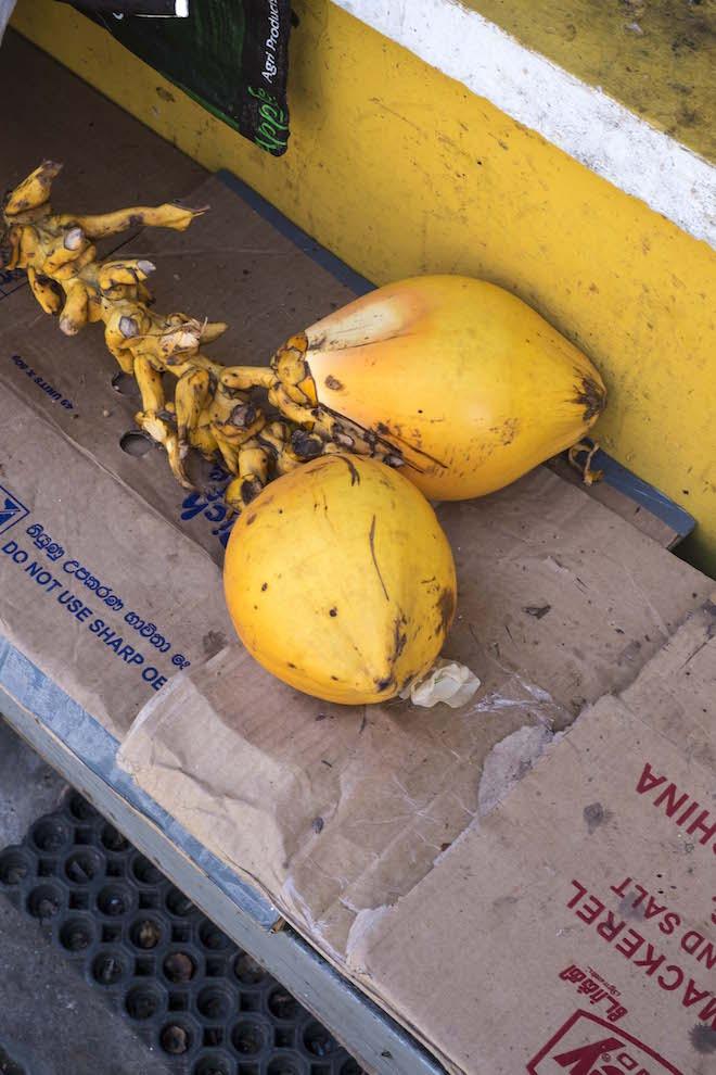 Visiting Sri Lanka Galle Coconuts